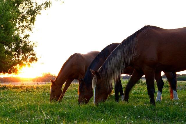 muesli-voor-paarden